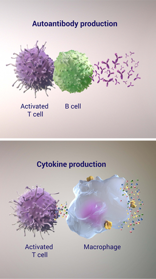 Autoantibody and Cytokine Production in RA